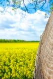 Boomringen met hemel en bloemen Royalty-vrije Stock Afbeelding