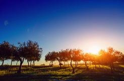 Boomschaduw met zonsondergang Stock Fotografie