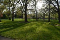 Boomschaduw op het gras royalty-vrije stock afbeelding