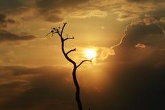 Boomschaduw in zonsondergang Stock Foto