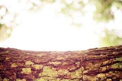 Boomschors en groen licht bokeh achtergrond-zacht uit nadruk Stock Fotografie