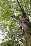Boomschors met groene bemost het groene mos groeien op boomboomstam in regenwoud stock fotografie