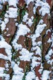Boomschors tijdens wintertijd in macrodieclose-up, boomschors in witte sneeuw, de achtergrond van de aardtextuur wordt behandeld stock afbeelding
