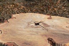 Boomsectie in een park royalty-vrije stock afbeelding