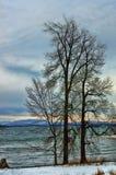 Boomsihouettes op een lakeshore in wintertijd stock afbeeldingen