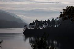 Boomsilhouet door het meer Stock Fotografie