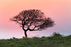 Boomsilhouet tegen zonsonderganghemel Stock Fotografie