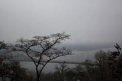 Boomsilhouet voor rivierbrug royalty-vrije stock afbeeldingen