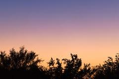 Boomsilhouetten na zonsondergang royalty-vrije stock afbeeldingen