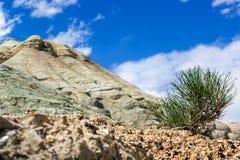 Boomspruit in de woestijn tegen de witte bergen Bewolkte hemel royalty-vrije stock foto