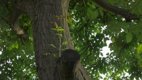 Boomspruit het planten stock videobeelden