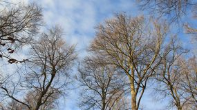 boomstam Boom zonder Bladeren in de Winter en Bewolkte Hemel stock afbeeldingen