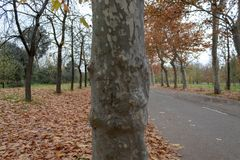 Boomstam in een park van Madrid royalty-vrije stock foto