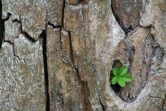 Boomstam en groene bladeren Stock Foto