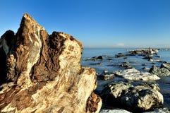 Boomstam en mariene rotsen Royalty-vrije Stock Afbeelding