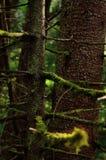 Boomstam en mos stock afbeelding