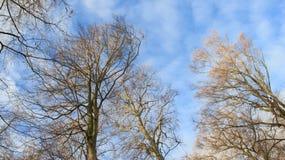 Boomstam en Steel Boom zonder Bladeren in de Winter en Bewolkte Hemel royalty-vrije stock foto's