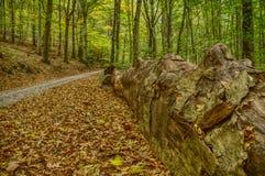 Boomstam en weg in een bos stock fotografie