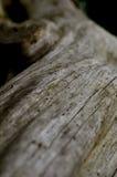 Boomstam, hout, bos en aard Stock Foto's