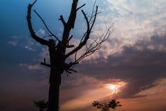 Boomstam onder de zonsondergang Royalty-vrije Stock Foto's