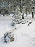 Boomstam op de Sneeuw stock foto's