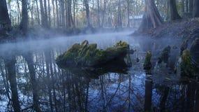Boomstam op een meer in een mistige dag in bosginnie springs, Florida De V.S. stock afbeeldingen
