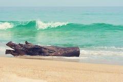 Boomstam op het strand stock foto