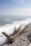 Boomstam op het Strand stock afbeelding