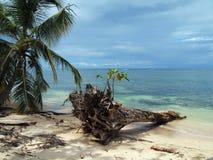 Boomstam op het strand royalty-vrije stock fotografie