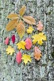 Boomstam van boom met verschillende herfstbladeren Stock Afbeelding