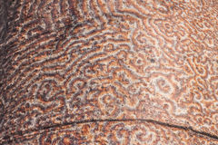 Boomstam van de baobab stock foto's
