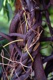 Boomstam van de boom. Stock Afbeelding