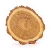 Boomstam van de boom Stock Afbeeldingen