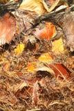 Boomstam van de palm Stock Afbeelding