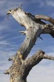 Boomstam van dode bomen en hemel stock afbeeldingen