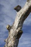 Boomstam van dode bomen en hemel royalty-vrije stock afbeeldingen