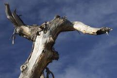 Boomstam van dode bomen en hemel royalty-vrije stock foto