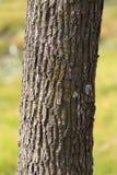 Boomstam van een boom in een park op de aard stock foto