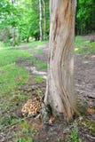 Boomstam van een boom zonder boomschors royalty-vrije stock afbeelding