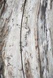 Boomstam van een boom zonder boomschors stock afbeeldingen