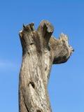 Boomstam van een dode boom tegen blauwe hemel Stock Foto