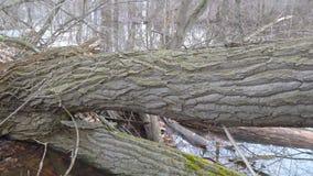 Boomstam van een gevallen boom in het bos stock videobeelden