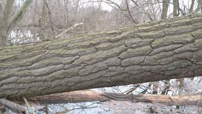 Boomstam van een gevallen boom in het bos stock video