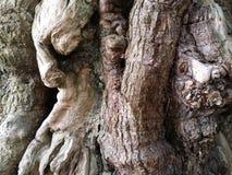 Boomstam van een oude boom stock fotografie