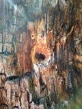 Boomstam van een oude boom met een holte in het vormhart stock foto