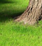 Boomstam van een oude boom op een groen gras stock afbeelding