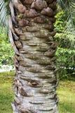 Boomstam van een palm stock afbeeldingen