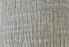 Boomstam van een palm Royalty-vrije Stock Foto