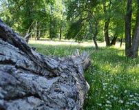 Boomstam van gevallen boom en paardebloemen stock afbeeldingen