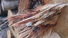 Boomstam van hout Stock Foto's